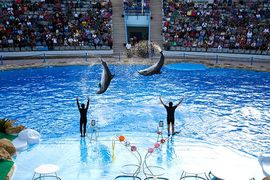 Watching Dolphin World Show Hurghada